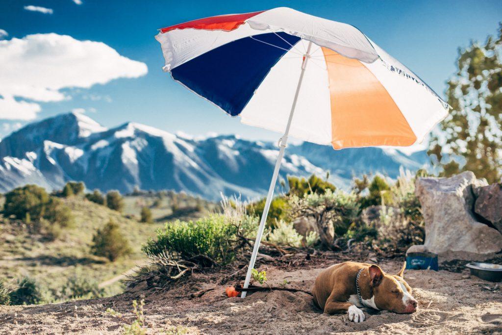 عکس چتر سایبان